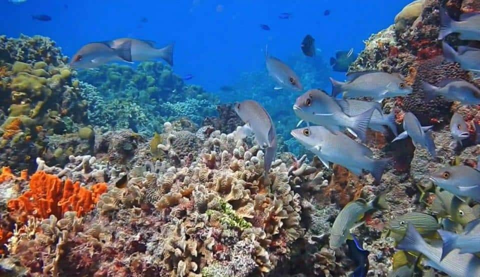 School of fish and coral reef Cozumel via Scuba Life Cozumel 2