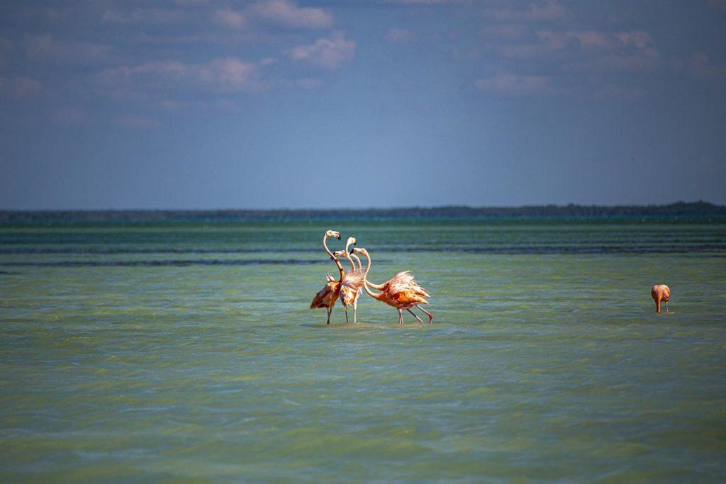 flamingos chatting 1