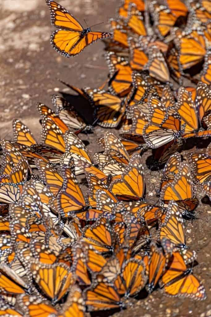 mariposa monarca sanctuary