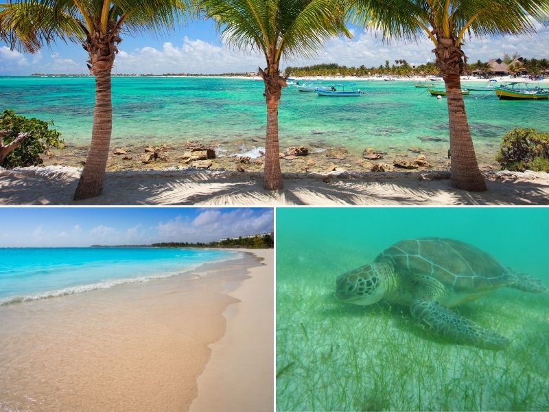 beach lined with palms, turtle
