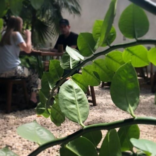 botanica garden plant