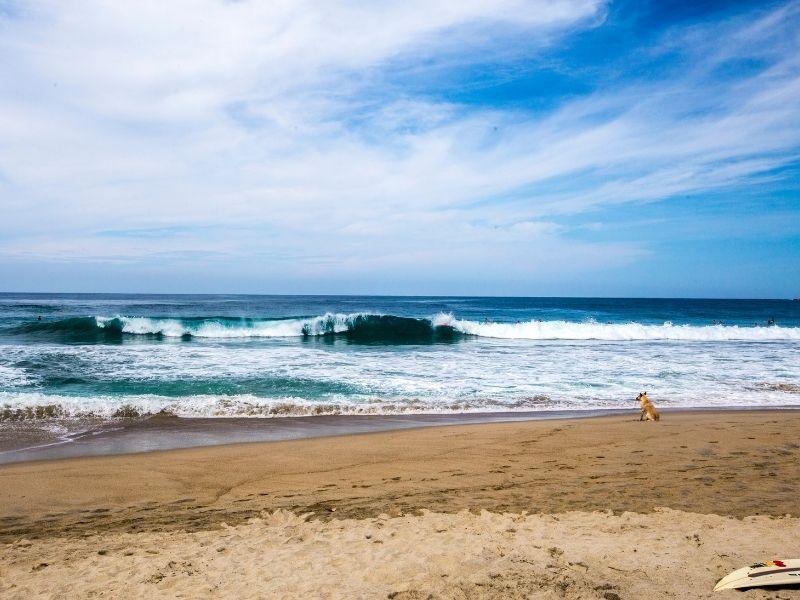 Zicatela beach - a dog watching the waves