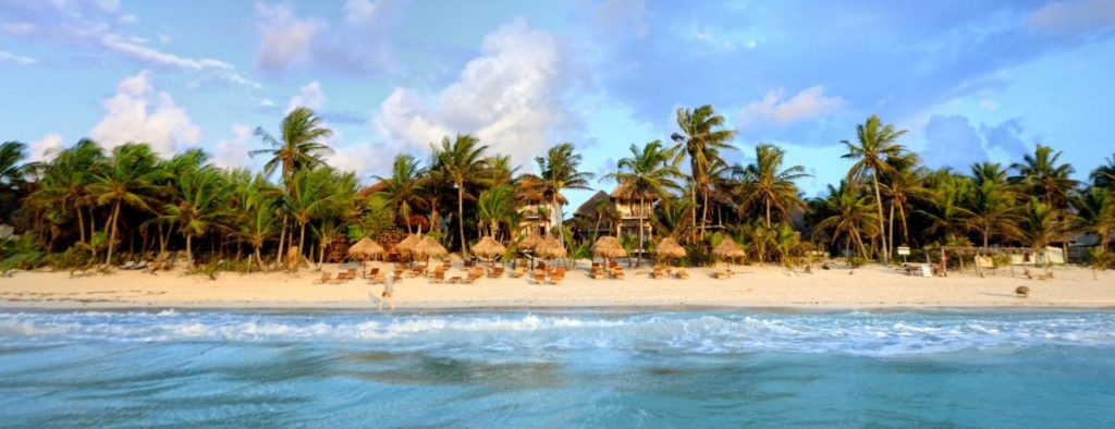 beach front lined with palm trees