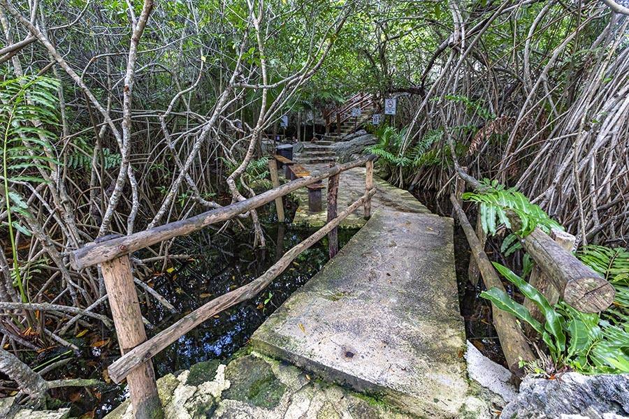 cenote cristalino boardwalk