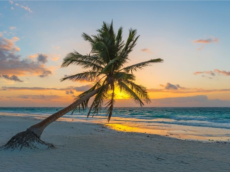 tulum beach at sunrise a palm leaning out - best time to visit Tulum