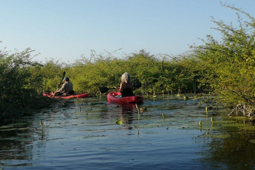 Kayak tour mangroves
