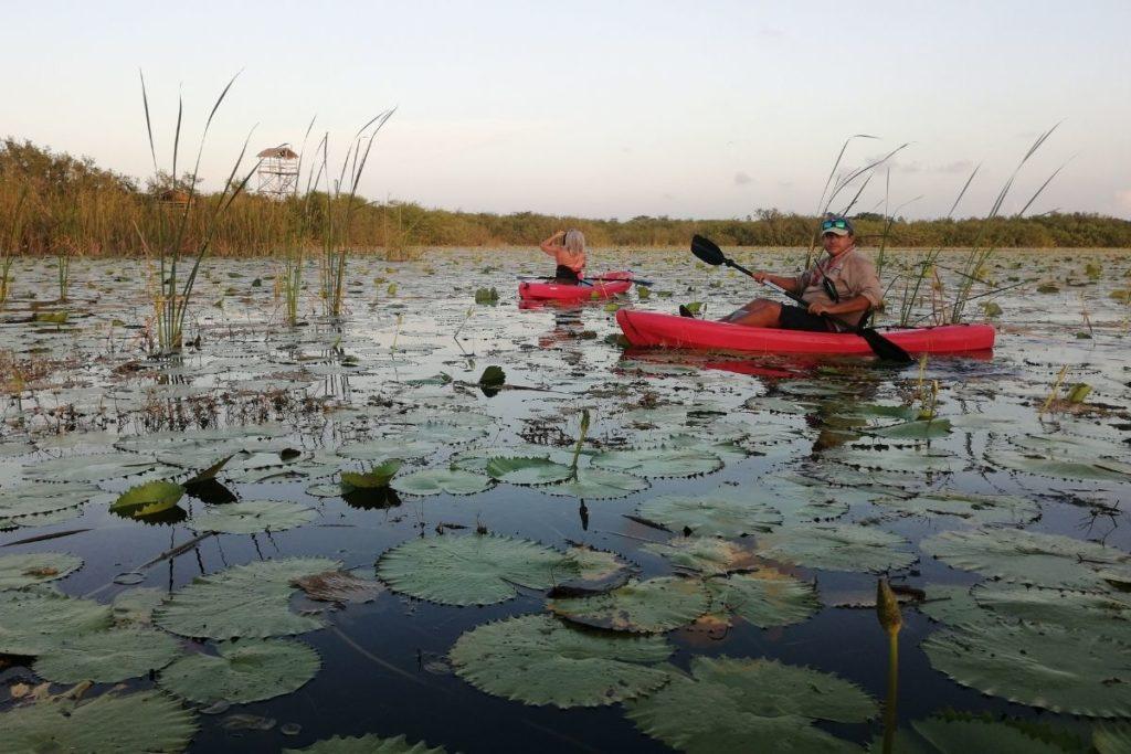 Kayak tour among lirios